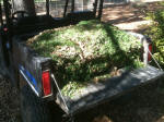 Polaris Ranger EV hauling grass clippings